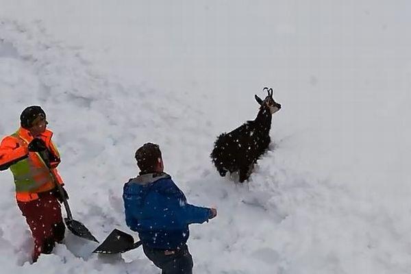 オーストリアの鉄道職員が除雪作業を中止し、雪に埋もれたヤギを救出