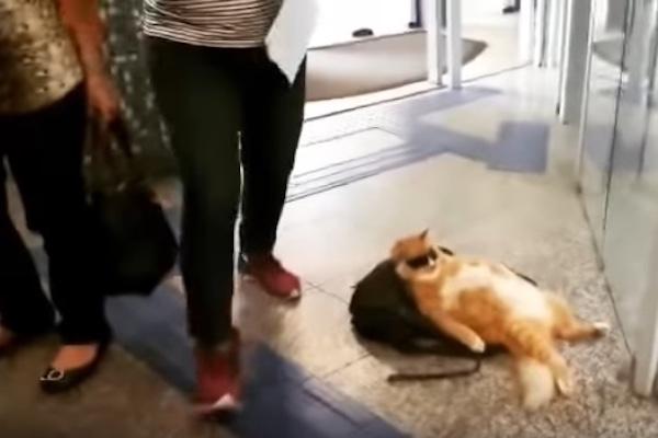 銀行のロビーにサングラスをかけてリラックスする猫が出現