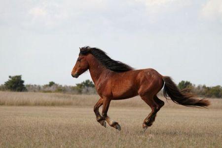 豪中央部を襲った熱波の影響で、野生の馬90頭の死骸が発見される