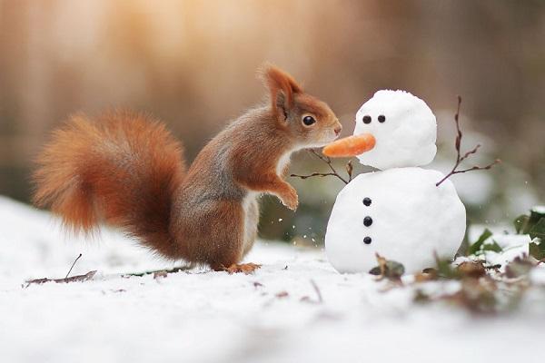 可愛くてちょっと可笑しい、野生動物の姿を捉えた写真の数々に注目が集まる