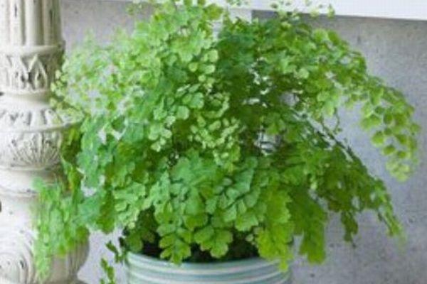 亡くなった妻の頼みで夫が水を与えていた植物、実はプラスチックだったと判明