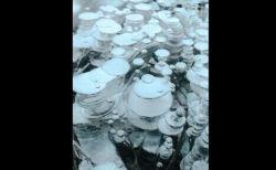 カナダの湖で不思議な光景が出現、メタンの泡が凍った姿が美しい