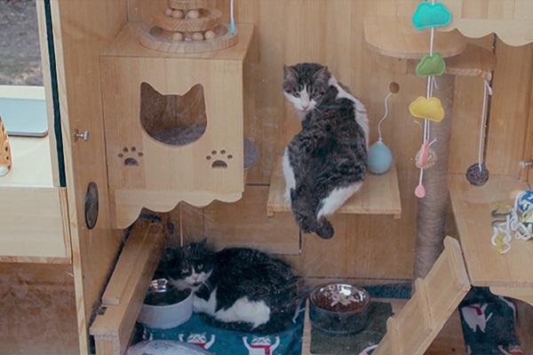 中国人エンジニアが開発した、AI搭載の野良猫専用シェルターがすごい