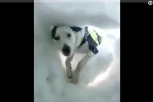 人命救助犬に発見される瞬間を、雪の中から撮った動画に心が溶ける