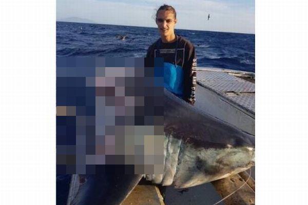 豪沖で巨大なサメの頭部だけを発見、胴体を食いちぎったのは何者?