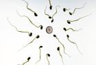 息子を失った親の訴えにより、死体から精子を取り出すことが認められる