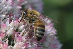 英で珍事件、巣箱を倒した泥棒が怒った8万匹のミツバチに襲われた?