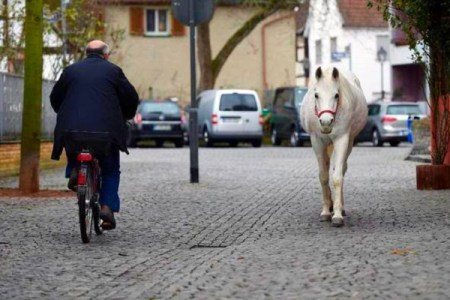 野生かと思いきやペットだった!14年間も毎日一頭で散歩に出かける馬が話題に