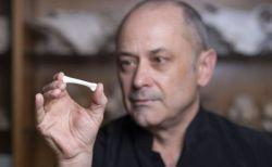フィリピンの洞窟で、これまでとは異なった新たな人類の化石を発見