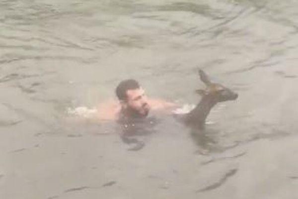 冷たい川で溺れていた子鹿、男性が躊躇せず飛び込み命を救う