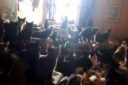 マンションの一室になんと300匹以上!カナダで多くのネコが発見される
