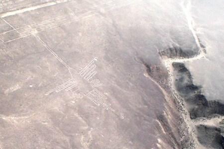 ナスカの地上絵に描かれた鳥の種が判明、新たな謎も浮上:北海道大学