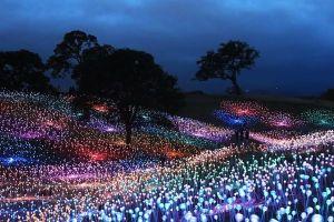 カリフォルニアで作られた幻想的な庭、夜空の下に人工の花畑が浮かぶ
