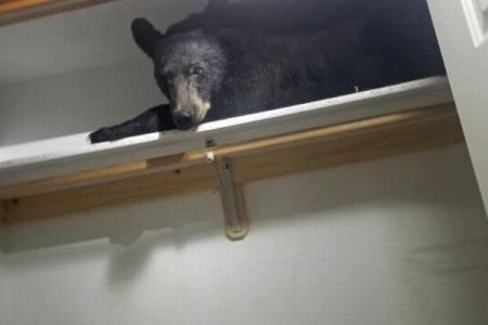 民家の衣装ダンスの中で野生のクマが爆睡!駆け付けた警官もびっくり