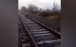 線路に繋がれ怯えるワンコ、手前で列車を止めた運転士の行動が讃えられる