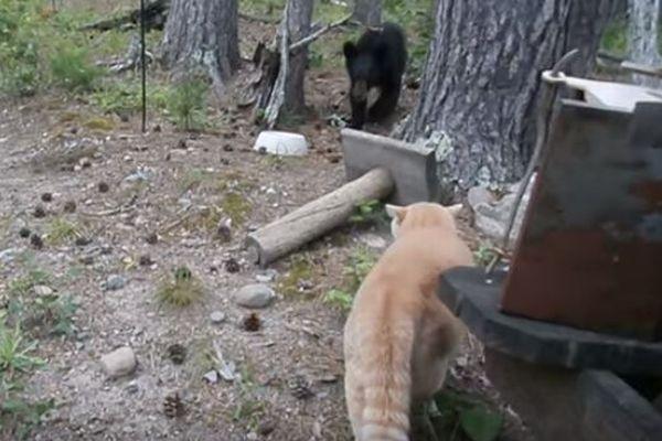 ネコがクマを撃退?数倍も大きな相手に挑んでいくニャンコがすごい!【動画】