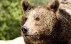クマが人間を保存食として蓄えていた?巣穴で1カ月も囚われていた男性を救出