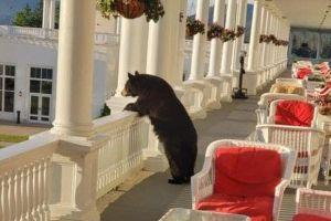 「朝日がきれいだなあ」ホテル内でクマが景色を眺める写真が話題に