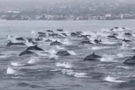 無数のイルカが沖合に出現、大きな群れが移動していく姿が壮観