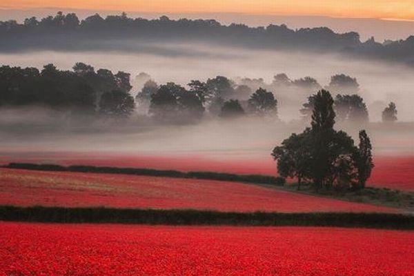 赤い絨毯のように広がるポピー畑、英で撮影された写真が美しい