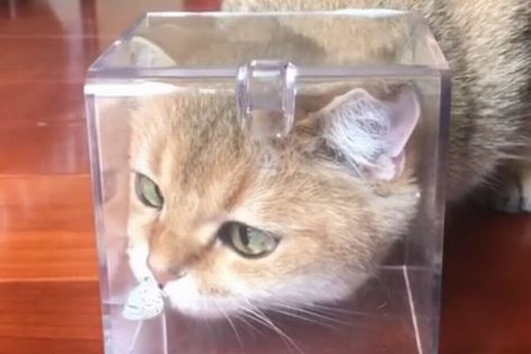 ちょっと珍しい瞬間、偶然ネコの鼻に蝶がとまる動画がかわいい