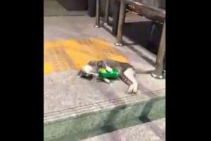 酔っ払ったの?駅でジュースの缶を抱えて眠る子猫の姿がユニーク