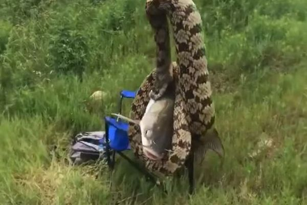リールを巻いたら大きなヘビが釣れちゃった!釣り人の男性も呆然