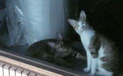 驚きすぎ?隣に引っ越してきたネコを見て、目を見開いたままの2匹がかわいい