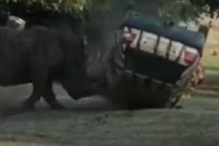 サファリパークで突然、サイが大暴れ、飼育員の車を何度もひっくり返す