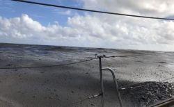 南太平洋の海が大量の軽石で覆われる、トンガ付近での海底噴火の影響か