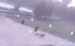3匹の犬を連れて散歩中の男性に雷が直撃、奇跡的に一命をとりとめる