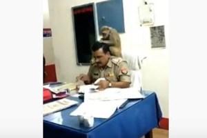 インドでサルを肩に乗せたまま、普通に事務作業する警官の姿がユニーク