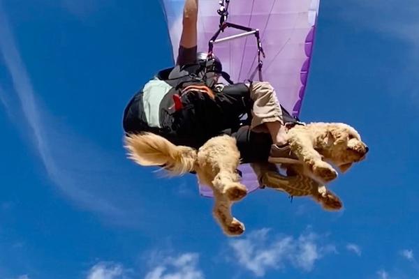 パラグライダーで悠々と空飛ぶ犬が可愛いと話題に【動画】