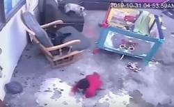 この猫がすごい!階段に接近する幼児に素早く気づき、押し返して転落を阻止