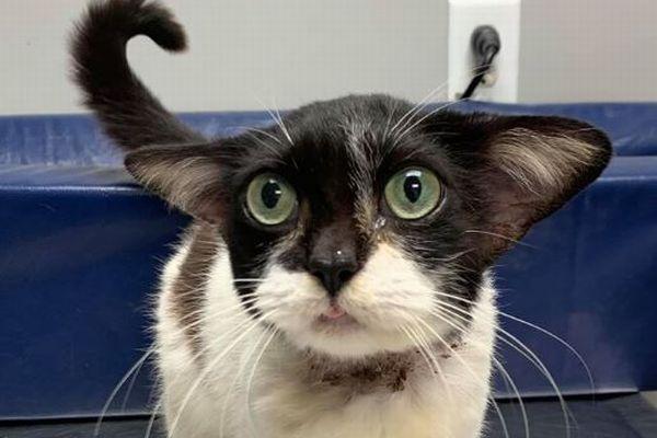 「ヨーダ」「ドビー」どちらに似ている?保護されたかわいい子猫が話題に