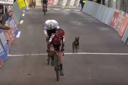 自転車競技のコースにワンコが登場、バイクを追いかけ選手も困惑
