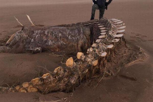 暴風雨「Ciara」の影響で、スコットランドの海岸に奇妙な骨が打ち上がる