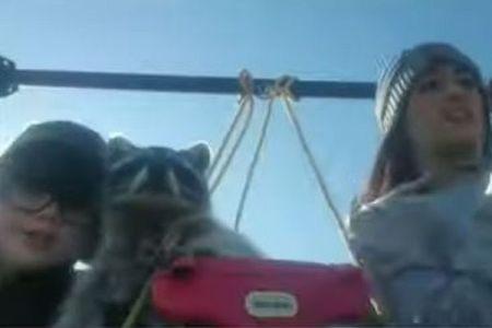 いつも一緒!家族とジープに乗って楽しむアライグマがかわいい