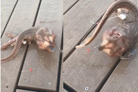 得体の知れない3本足の生物が釣り上げられ、動画に140万の「いいね」