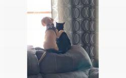 肩に手を置き、仲良く窓の外をみつめる子犬と子猫がかわいい!【動画】