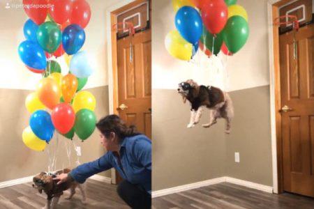 TikTokで異常人気の「飛ぶ犬」動画が笑える