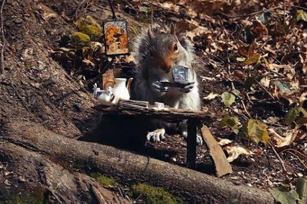 リスが本を読んでいる?人間のような仕草をする動画かわいい