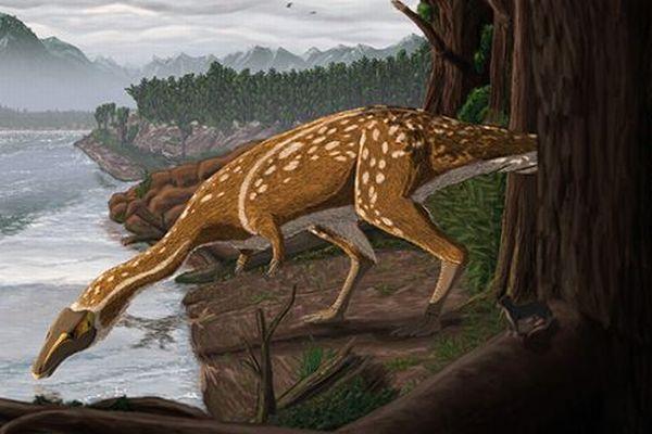 大人になると歯が失われる珍しい恐竜、オーストラリアで化石が確認される