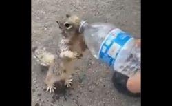 「喉が渇いたよう!」子供にペットボトルの水をねだるリスの動画が話題に