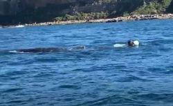豪の海で2人の男性が海に飛び込み、漁具が絡まったクジラを救助【動画】