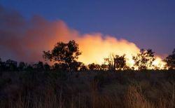 オーストラリアで昨年起きた山林火災、30億匹の野生動物が犠牲になった可能性