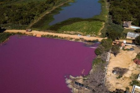 何故か湖の半分だけが紫色に染まる、魚や鳥も大量に死亡【パラグアイ】