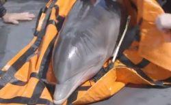 恐るべきハリケーンの威力、海から14km離れた池でイルカを発見・救出