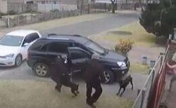 飼い主を救うため強盗に襲いかかったドーベルマン、銃で撃たれるも回復