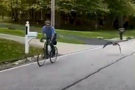 自転車に乗る男性と一緒に飛ぶ雁、偶然警察官が目撃【動画】
